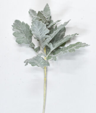 Dusty Miller Spray
