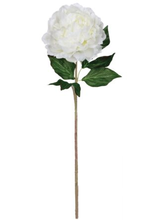 Peony Stem in Pure White