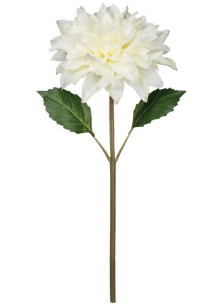 Dahlia Stem in White
