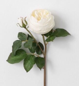 English Rose Stem in Cream