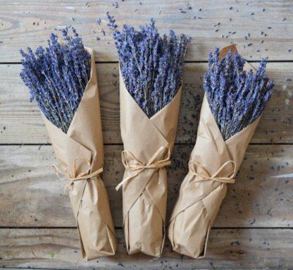 French Lavender Bunch
