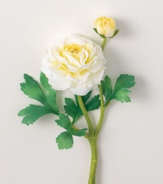 Ranunculus Stem in White