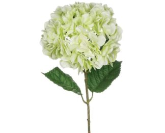 Hydrangea Stem in Light Green